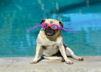 How to introduce your dog to swimming and water safety tips from Pets Best pet health insurance.