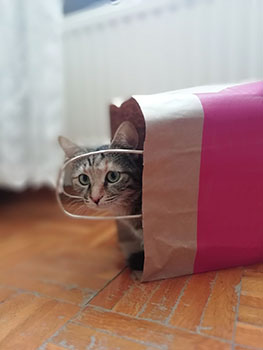 Read on to have your cat's behavior explained.