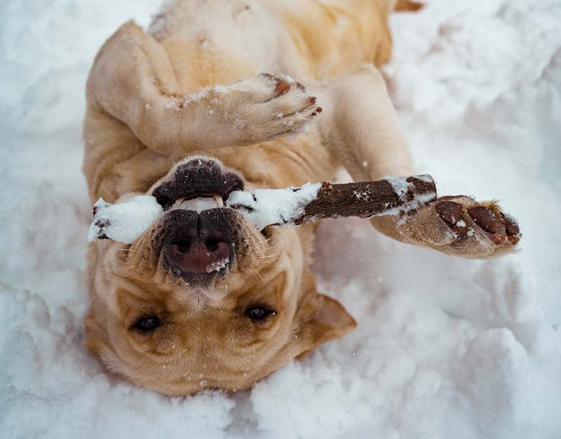 Follow these 5 winter exercise tips to keep your pets health during the winter months.