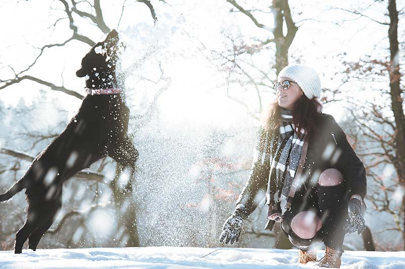 Keep your dog or cat safe in cold weather this winter.
