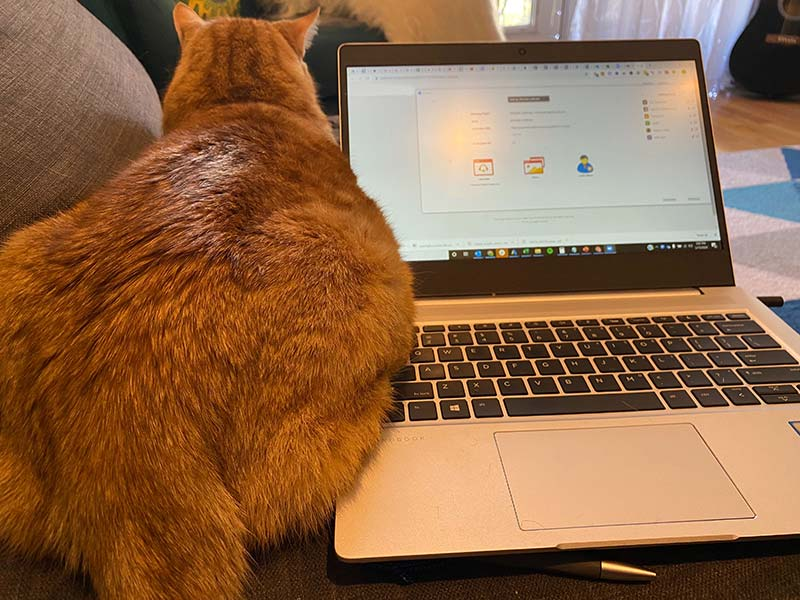 Working from home with a needy cat can present a challenge.