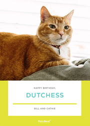 Pet Birthday ECard Templates