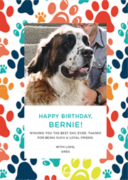 Pet Birthday ECard Templates Select