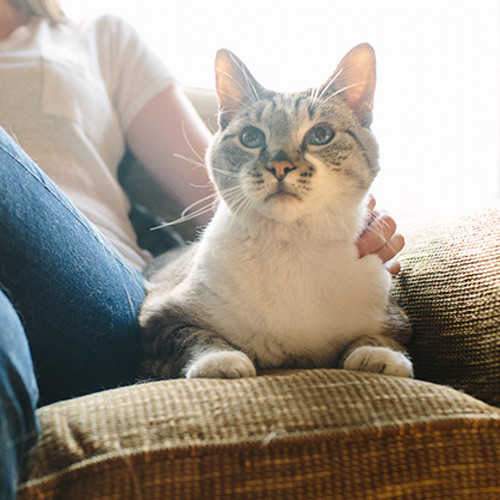 Pet Insurance Plan Cat Coverage Examples